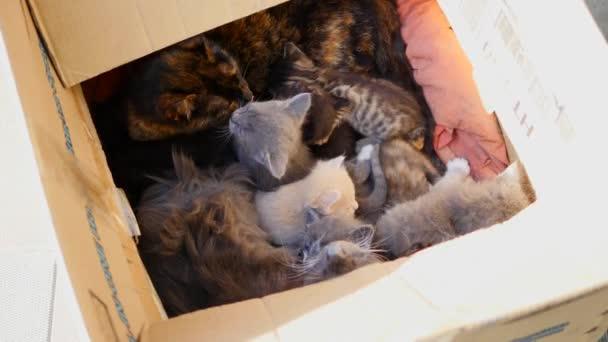 Cute tabby kitten in a box