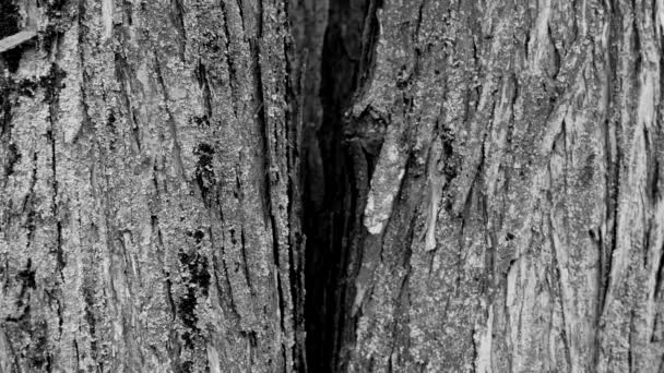 bark of oak tree. background. wooden texture