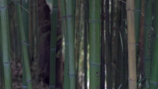 Bamboo rainforest natural environment