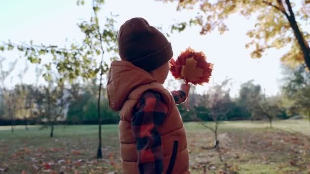 Autumn. Little boy look to maple leaf. Happy childhood. Autumn time. Little boy holds maple leaf.