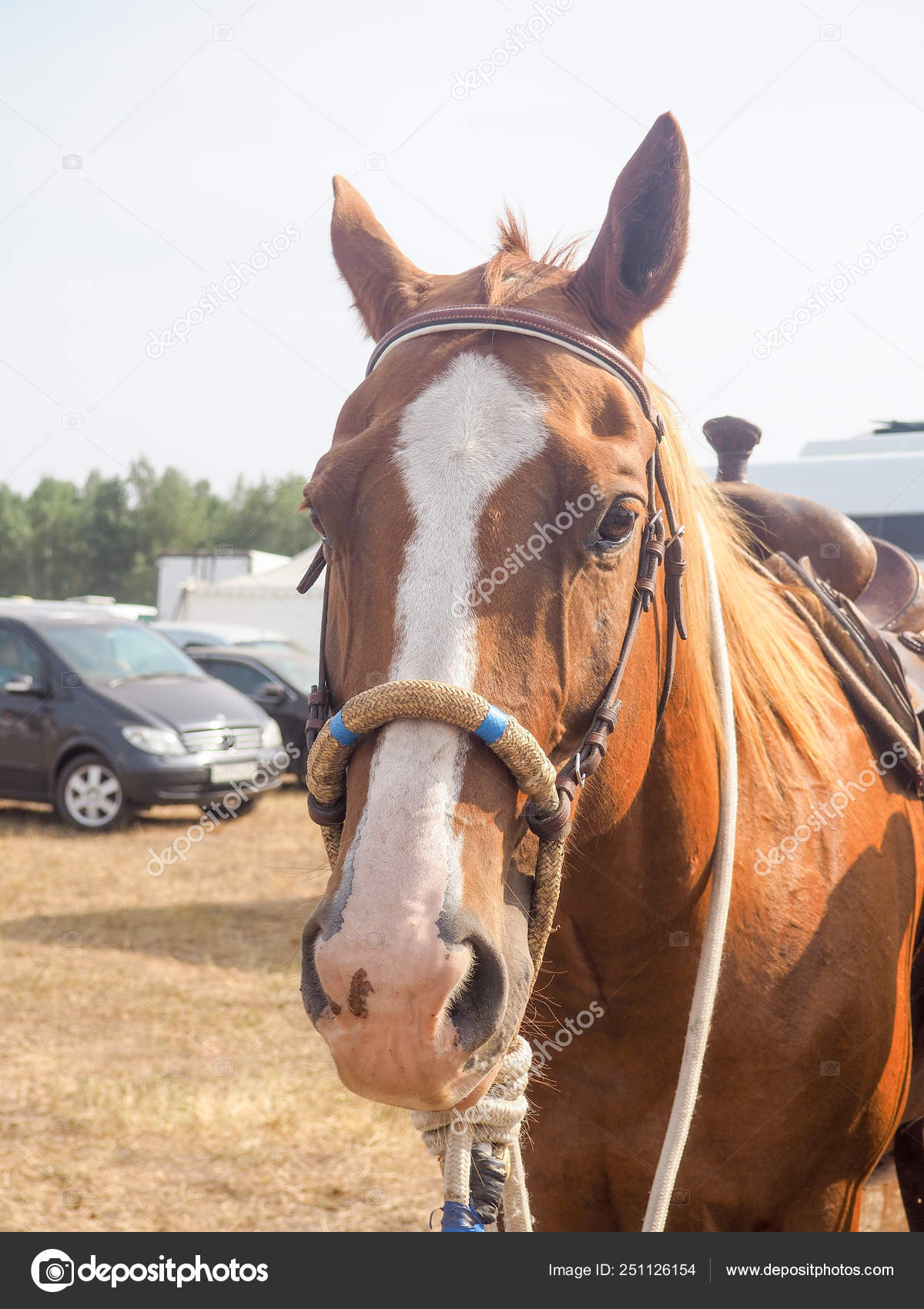 Brown Horse Head With Reins Close Up View Of Beautiful Horse Face Standing Outdoor In Farm And Looking To Camera Stock Photo C Byallasaa 251126154