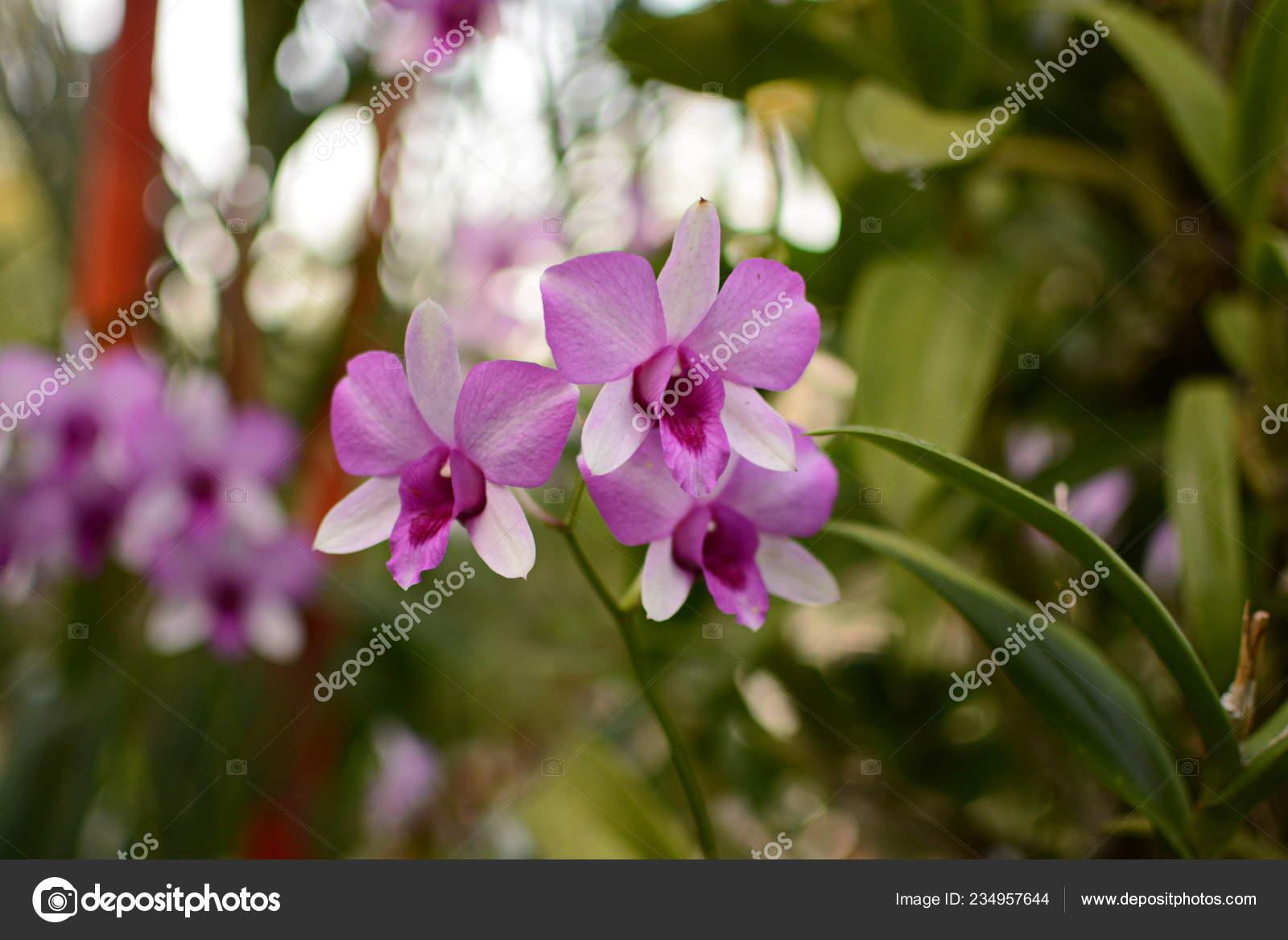 Fleur Orchidée Jardin Orchidées Jour Hiver Printemps Fleur ...