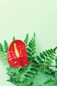 Anthurium červené květy, kapradí a monstera listy na zeleném pozadí. Letní maketa