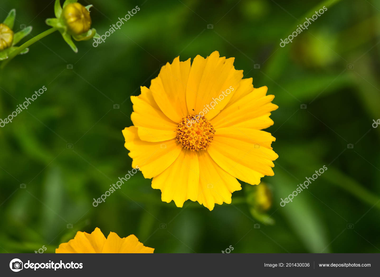 Wild flowers are beautiful flowers healthy beautiful wild flowers cosmos on a summer day meadow flower nature backgrounds textures vadim zhakupov gmail izmirmasajfo