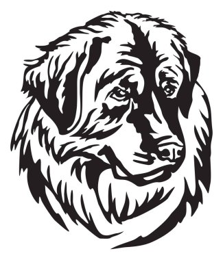 Decorative portrait of Dog Leonberger, vector isolated illustration in black color on white background. Image for design and tattoo.