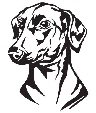 Decorative portrait of dog German Pinscher, vector isolated illustration in black color on white background