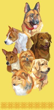 Vertical postcard with dogs of different breeds (german shepherd; golden retriever, small pomeranian, Pitbull, Nova Scotia Duck Tolling Retriever, Basenji, sheltie)on yellow background.