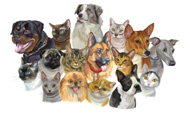 Set of colorful vector portraits of dogs Rottweiler, Australian shepherd, Pug, Greyhound, german shepherd and cats Thai, Burmese, Maine Coon, Exotic Shorthair breeds isolated on white background
