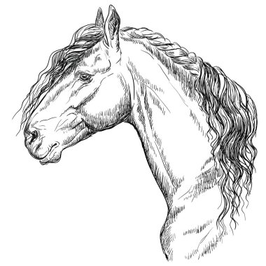 Friesian horse portrait. Horse head  in profile in monochrome color isolated on white background. Vector hand drawing illustration