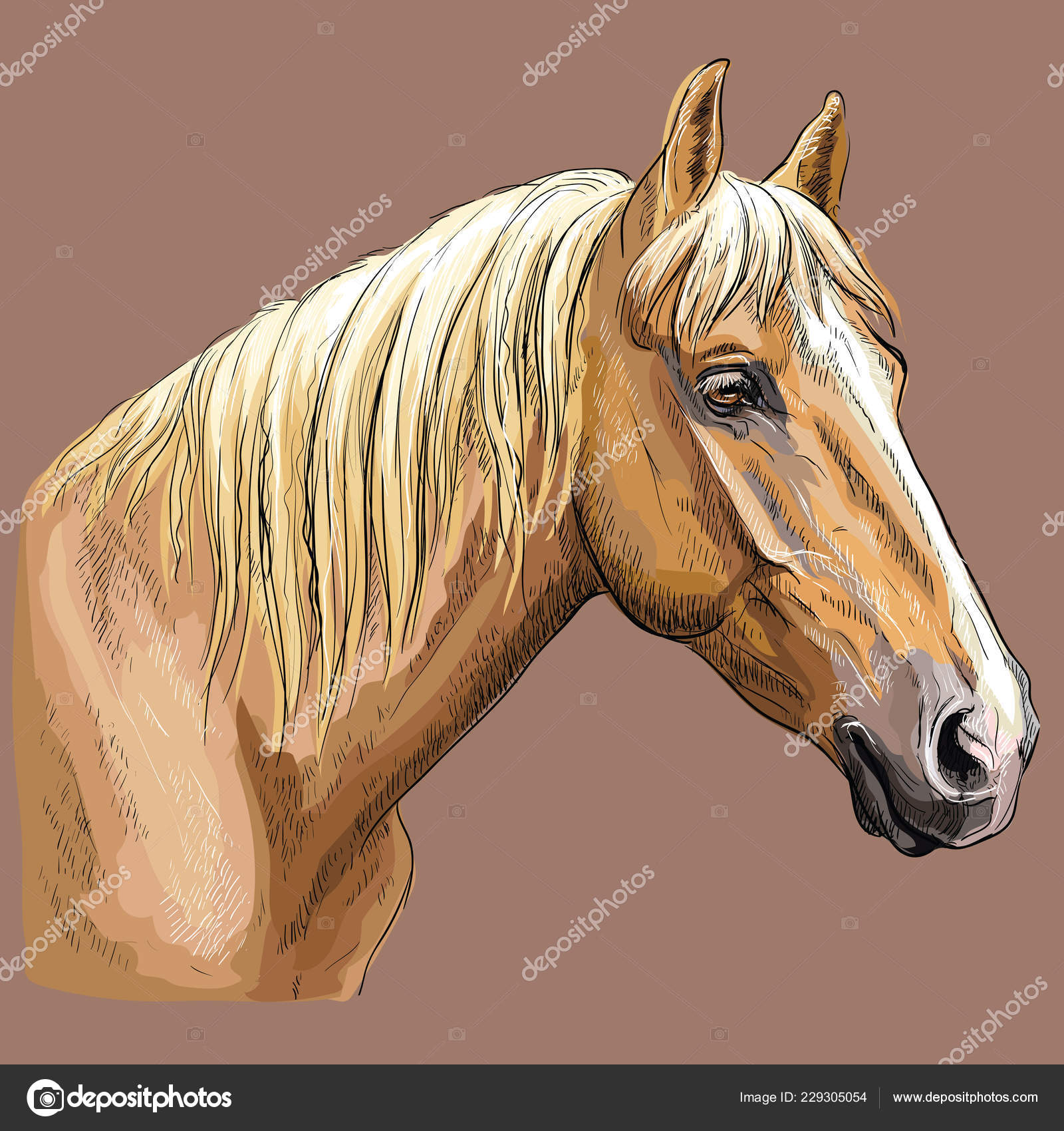 Colorful Hand Drawing Portrait Palomino Horse Horse Head Profile Isolated Stock Vector C Alinart 229305054