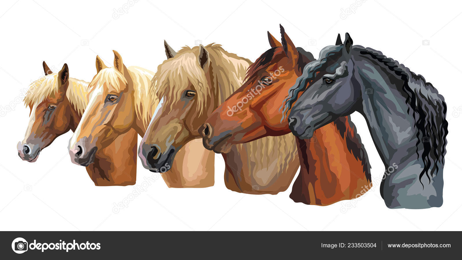 Set Colorful Vector Portraits Horses Breeds Looking Profile Russian Heavy Stock Vector C Alinart 233503504