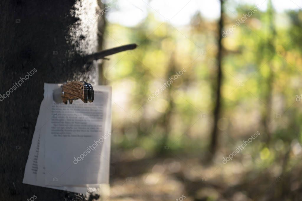 Written book pages stuck with a hunting knife to a tree trunk, in a fall forest, on a sunny day of autumn. Selective focus image.