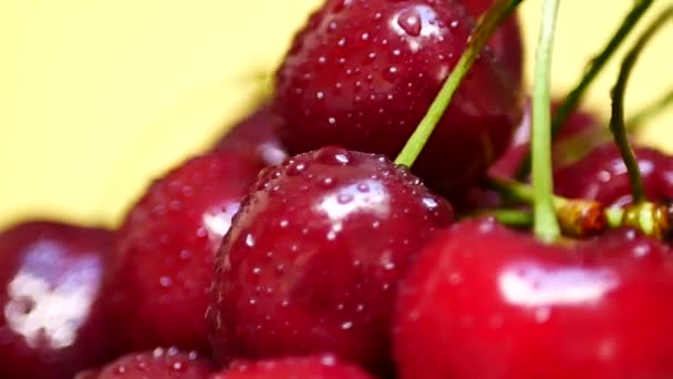 Ripe Juicy Dark Red Cherry with Drops of Water