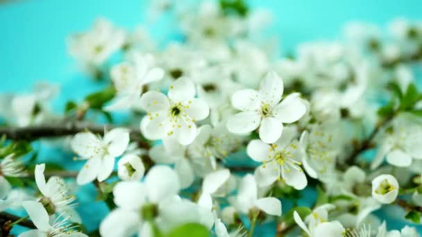 Spring background with white blossom