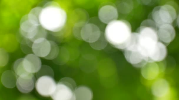 rozostření zelené pozadí
