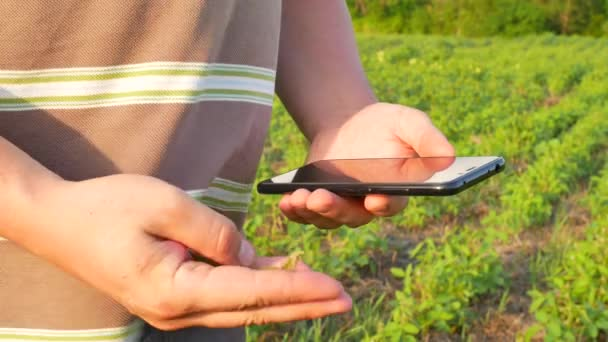 Farmer using digital smartphone in cultivated soybean crops field
