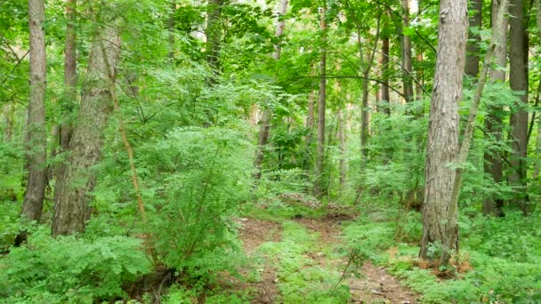 Forest with trees and shrubs with green leaves