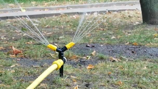 Žlutá černá zalévání trávníku zavlažovací systém spreje vodu na trávě na zahradě na podzim