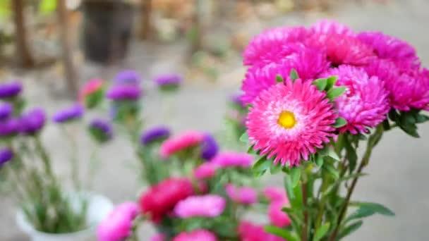 Žena ruce floristů kytice s michaelmas daisy nebo aster