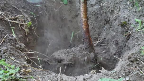 Ruce s lopatou se zaboří země a zasadí strom