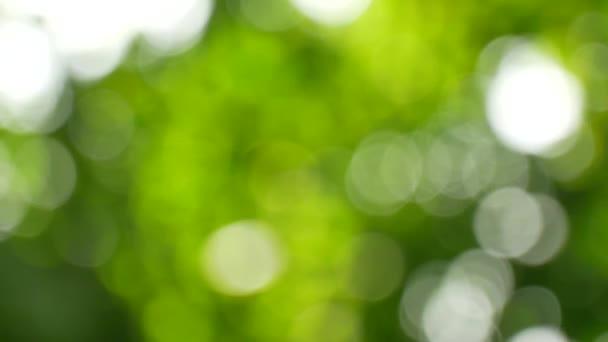 Blur green background