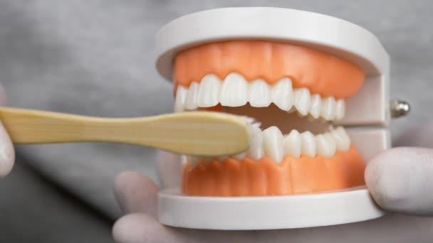 Zubař v bílých rukavicích, učí, jak vyčistit zuby