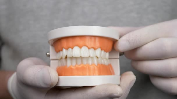 Dentist in white gloves shows teaching model of gums and teeth