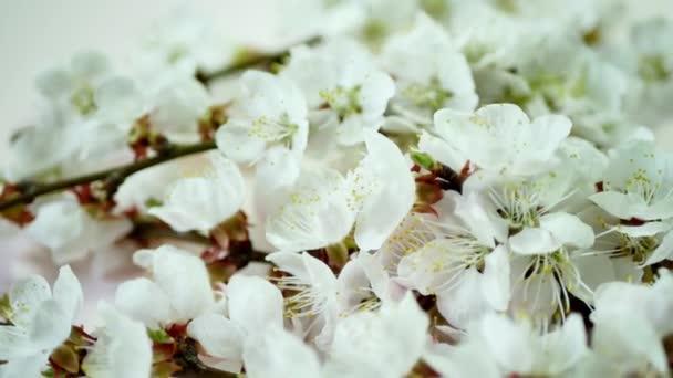 jarní květy na žlutém podkladu