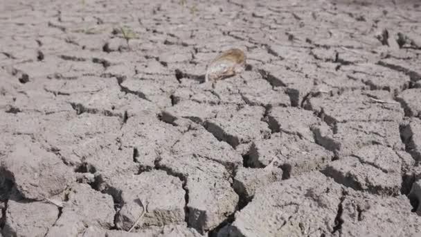 Trockengebrochener Boden der Trockenheit auf See, Fluss oder Meeresboden