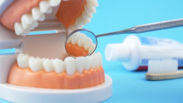 Dental Doctor Examines the Oral Cavity