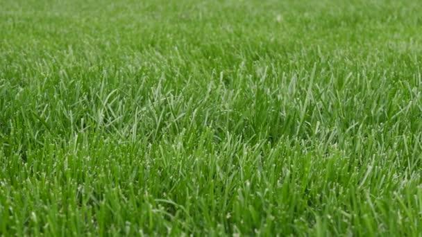 Vzor pozadí s krásnou zelenou trávou