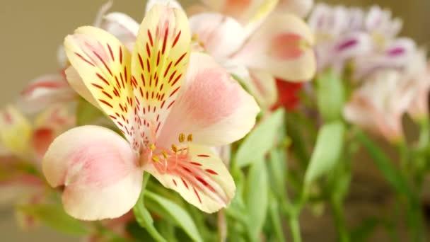 Virág csokor gyönyörű rózsaszín Lilium