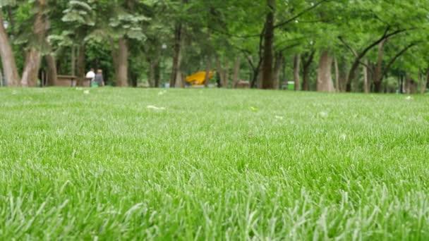Háttere minta gyönyörű zöld fű