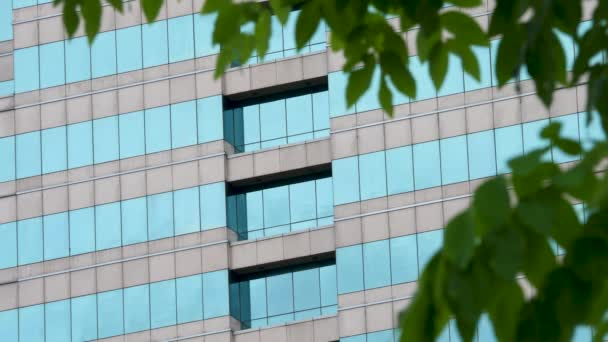 Čisté sklo zeď se zelenými listy stromy pozadí