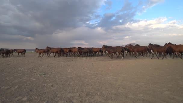 Kayseri, Turecko - srpen 2017: Divoké Yilki koně běží tryskem a kopání prach
