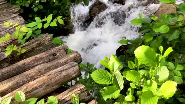 Nádherná Zelená příroda řeky a lesa v Karcal horách Černé moře regionu, Karadeniz, Artvin, Turecko