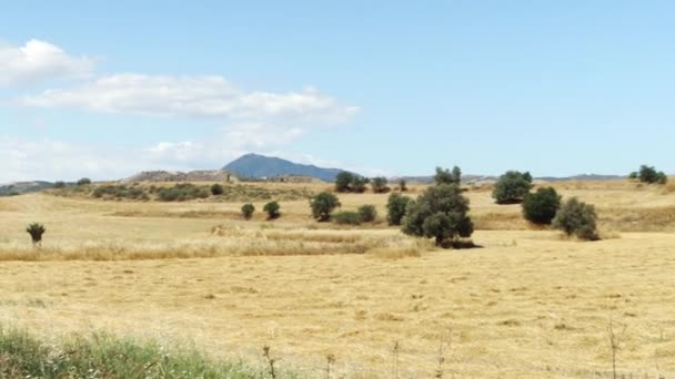 Spring field under blue sky in Larnaca, Cyprus. Rural landscape of grass and trees on sunny day