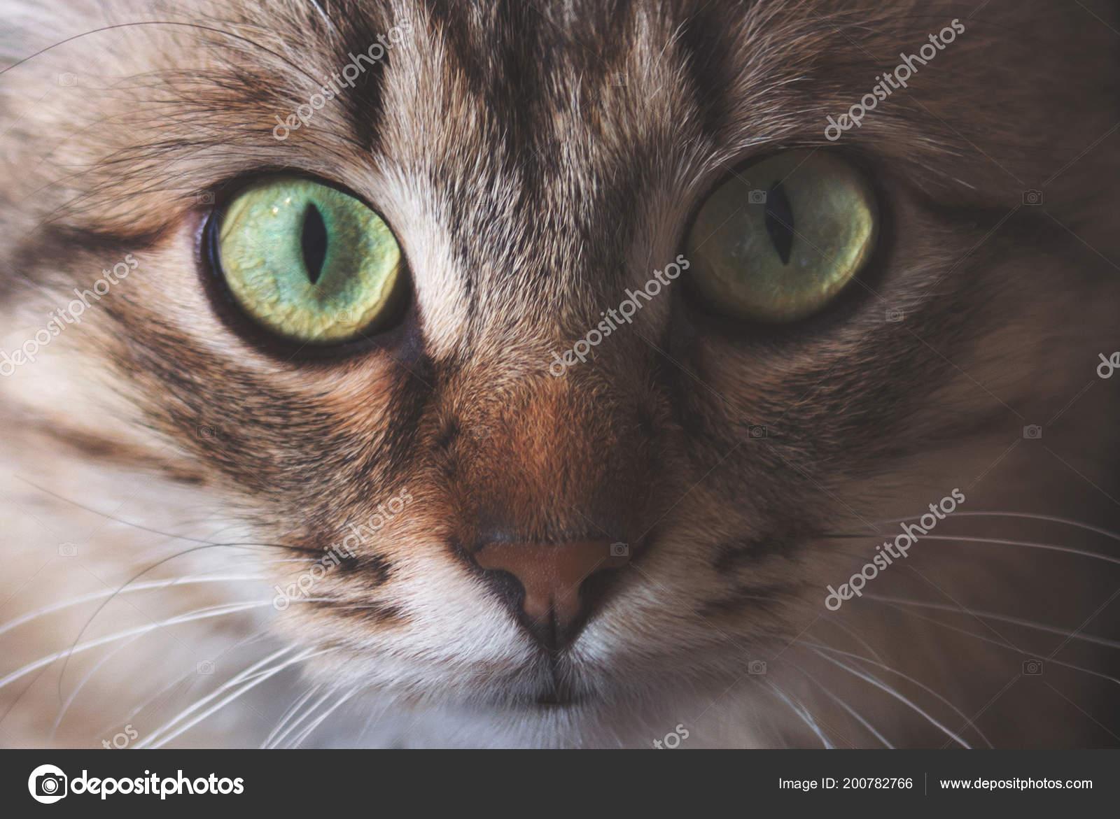 très sombre chatte