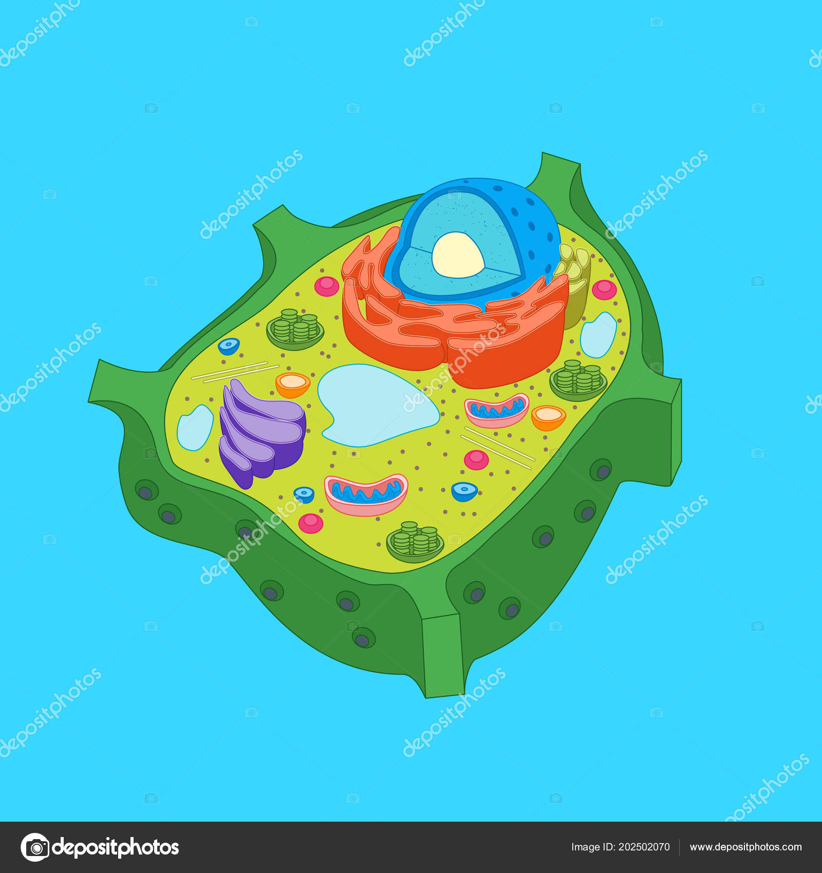 Cartoon Plant Cell Anatomy Banner Card Poster. Vector — Stock Vector ...