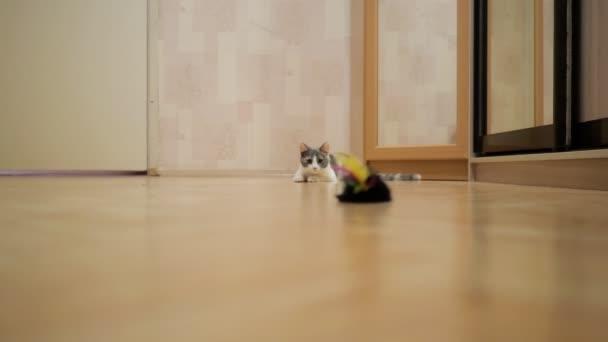 Hauskatze zeigt Hunter-Instinkt Sprung auf die Maus Spielzeug