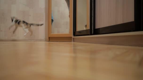 Süße Katze spielen mit einem Spielzeug-Maus zu Hause,
