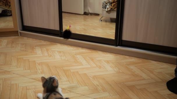 Süße Katze spielen mit einem Spielzeug-Maus zu Hause