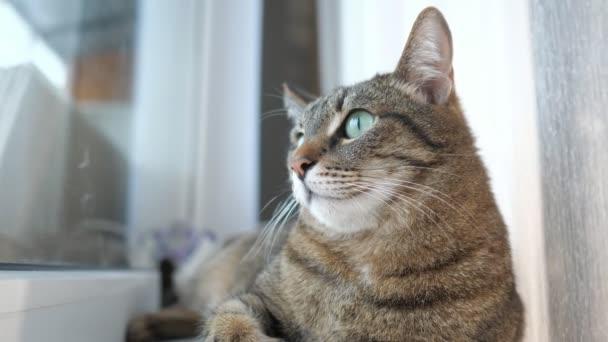Die Katze auf der Fensterbank liegen und schaut aus dem Fenster