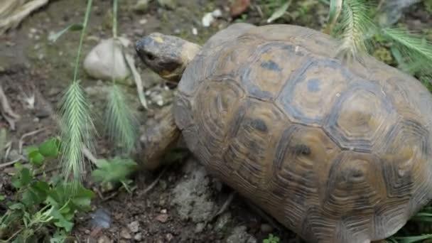 Zöld füvön mozgó teknős, közelközeli