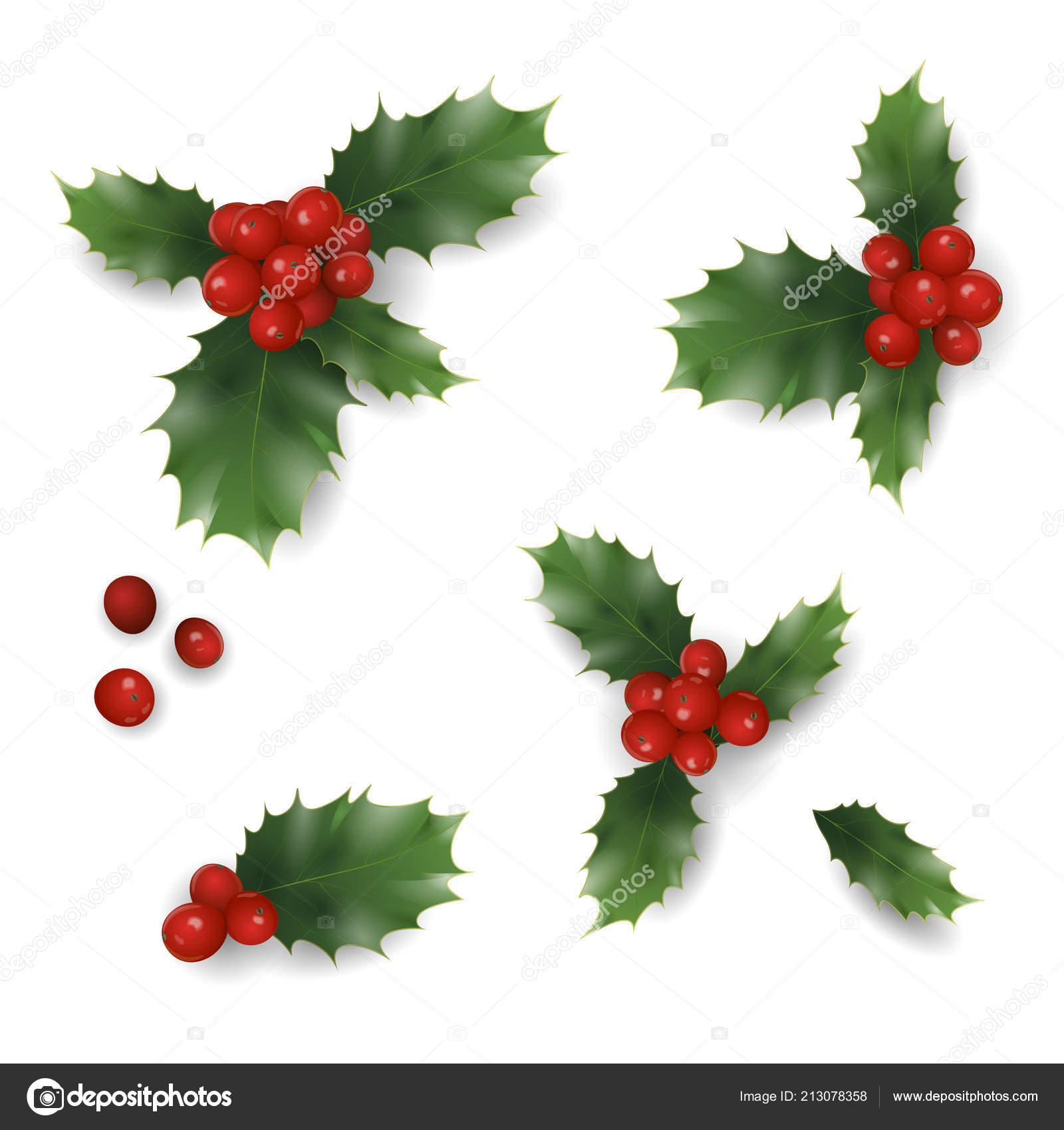 Realistico Modello Natale Capodanno Rosse Dell Agrifoglio Bacca