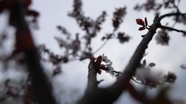 Kvetoucí krásné bílé jarní strom, přírodní přírodní pozadí.