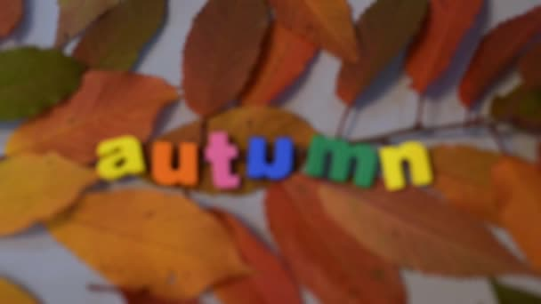 Word autumn of colorful letters on yellow leaves.