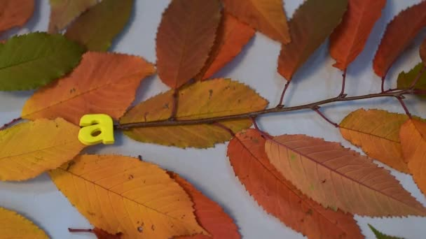 Male hand write with colorful letters on yellow leaves, word, autumn.