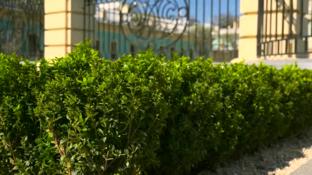Boxwood Buxus Bush Leaves. Urban Green Space Vintage Baroque Palace Surrounded By Intricate Iron Railing