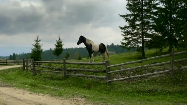 Gömbcsuklós panorámafelvétel szemcsésedik ló a fű, a hegyekben. Vidéki falucska vidéki úton. Fából készült kerítés